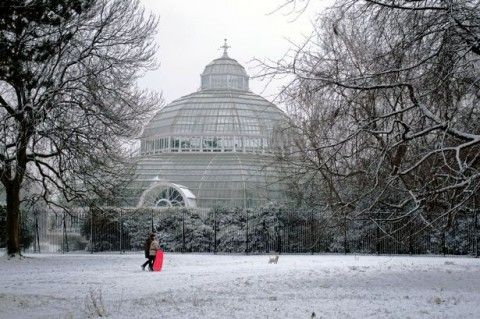 Palm-House-Winter