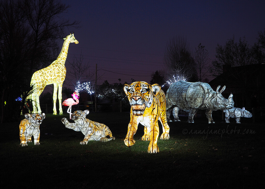 chester zoo lanterns 2018 christmas event apartments chester