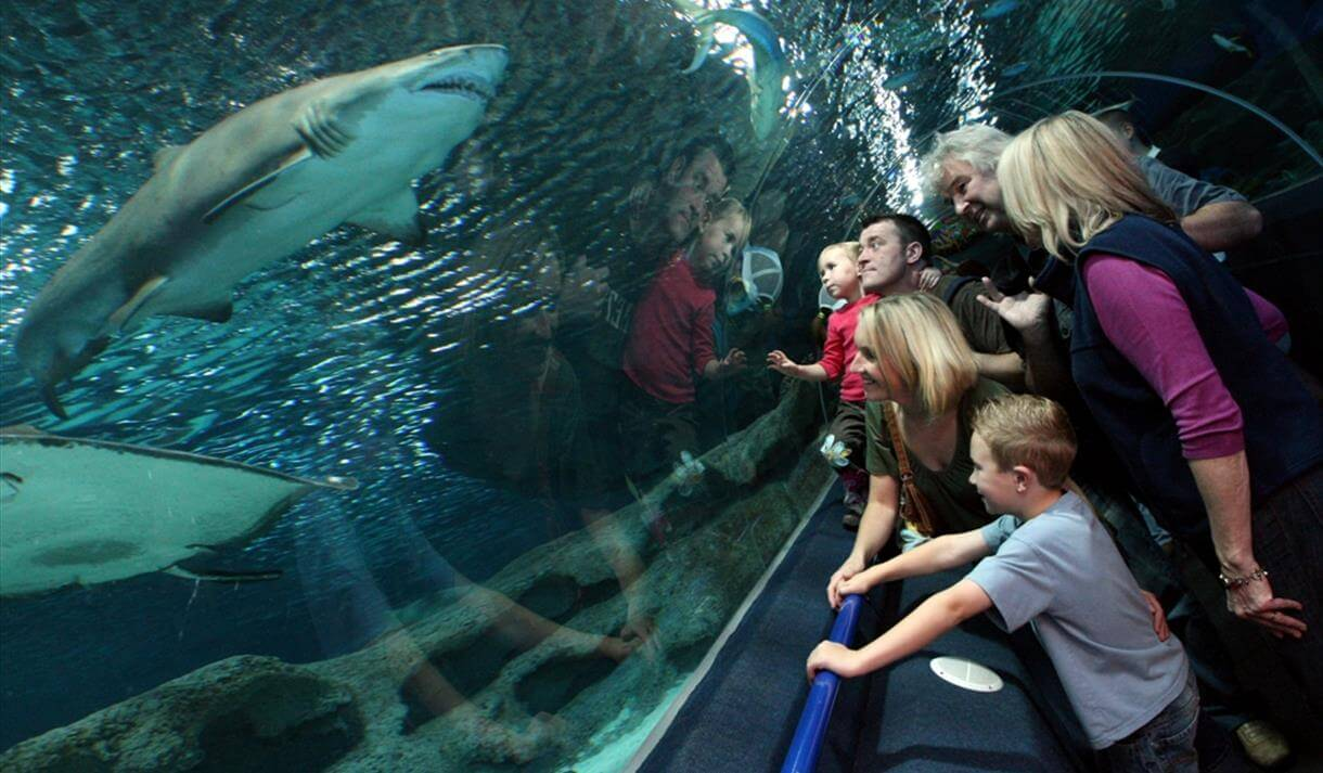 blue planet aquarium family things to do in cheshire