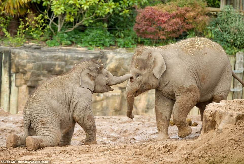 Chester Zoo Cheshire family things to do
